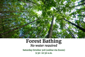 Forest Bathing – No Water Required