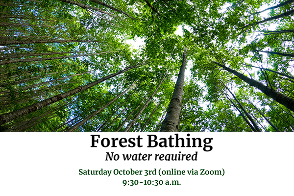 Forest Bathing Event