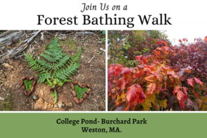 Student Forest Bathing Walk