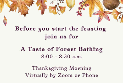 Thanksgiving Morning – A Taste of Forest Bathing