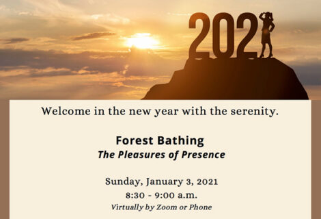 Forest Bathing The Pleasure of Presence