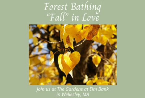 Forest Bathing – Fall In Love